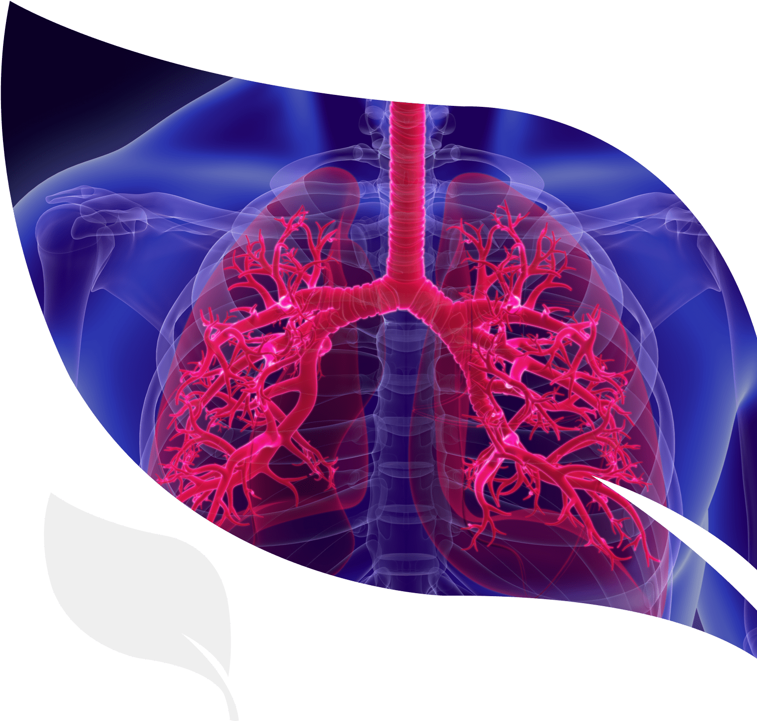 human lungs, relevant to idiopathic pulmonary fibrosis (IPF), for which IBIO-100 candidates are in development for therapeutic applications