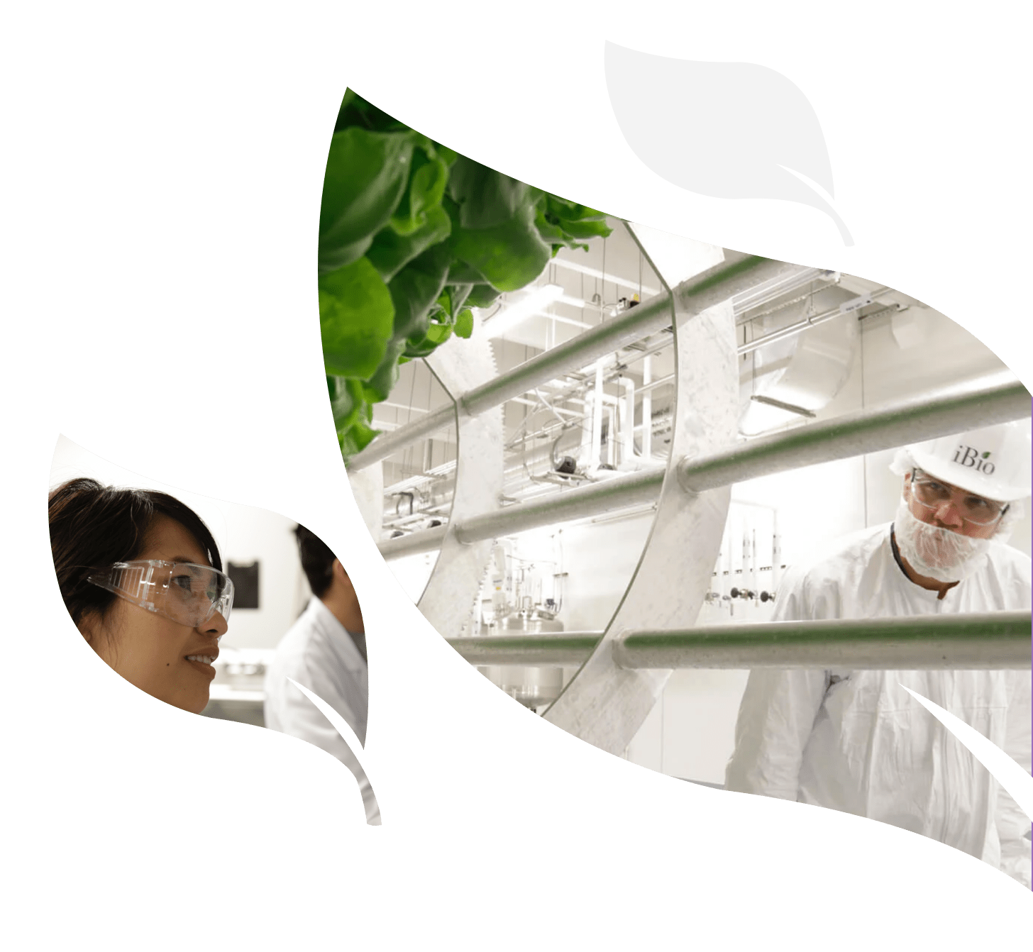 scientists in a lab with leaves