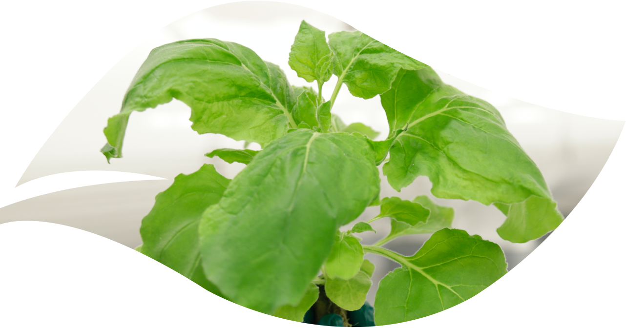 plant used in biopharma manufacturing processes